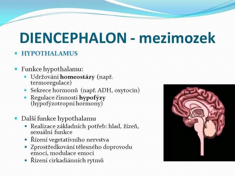 DIENCEPHALON - mezimozek HYPOTHALAMUS Funkce hypothalamu: Udržování homeostázy (např.
