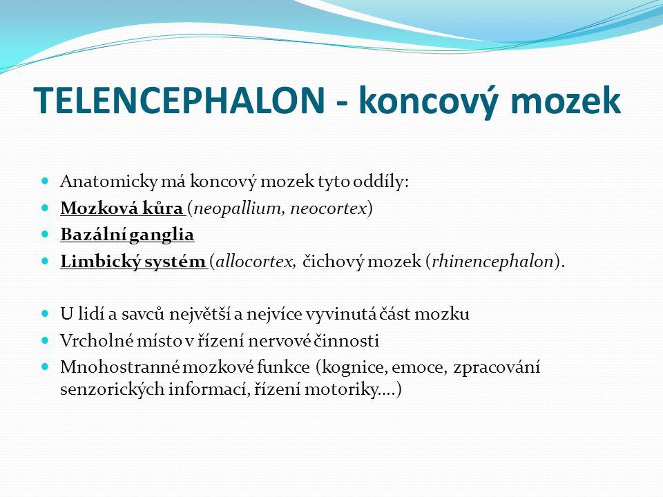TELENCEPHALON - koncový mozek Anatomicky má koncový mozek tyto oddíly: Mozková kůra (neopallium, neocortex) Bazální ganglia Limbický systém (allocortex, čichový mozek (rhinencephalon).