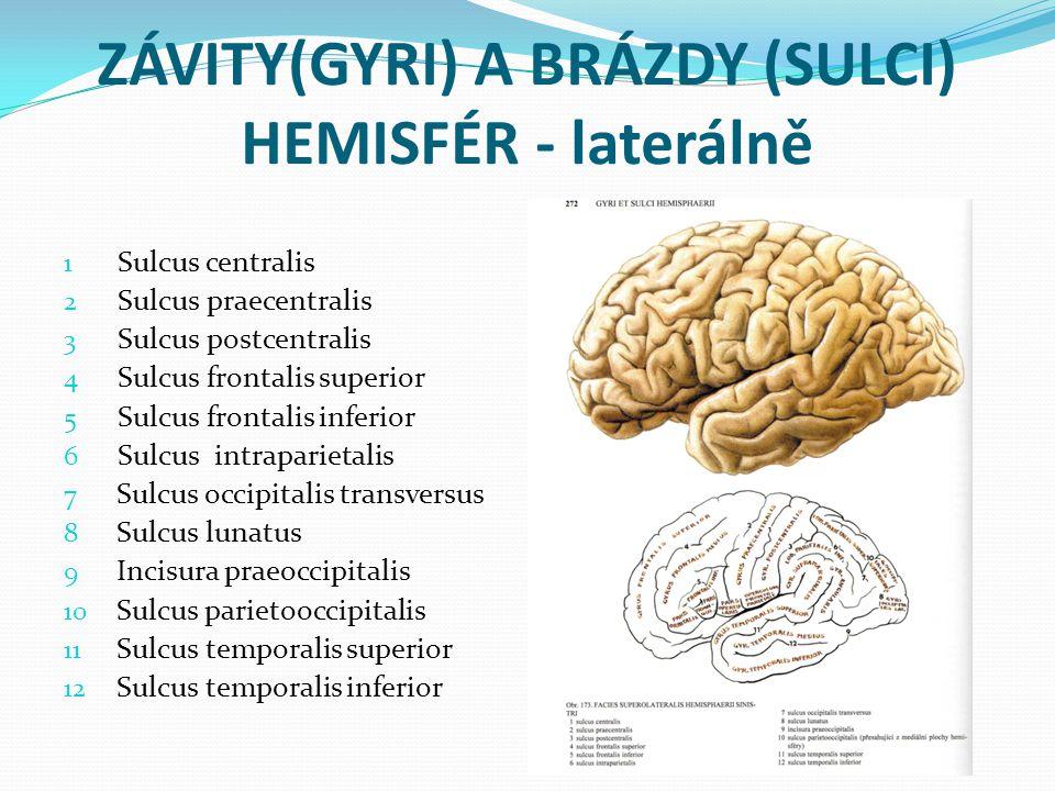 ZÁVITY(GYRI) A BRÁZDY (SULCI) HEMISFÉR - laterálně 1 Sulcus centralis 2 Sulcus praecentralis 3 Sulcus postcentralis 4 Sulcus frontalis superior 5 Sulcus frontalis inferior 6 Sulcus intraparietalis 7 Sulcus occipitalis transversus 8 Sulcus lunatus 9 Incisura praeoccipitalis 10 Sulcus parietooccipitalis 11 Sulcus temporalis superior 12 Sulcus temporalis inferior