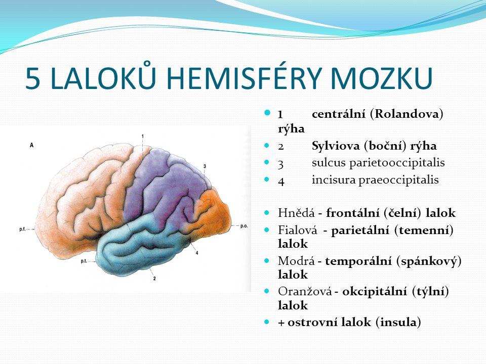 5 LALOKŮ HEMISFÉRY MOZKU 1 centrální (Rolandova) rýha 2Sylviova (boční) rýha 3sulcus parietooccipitalis 4incisura praeoccipitalis Hnědá - frontální (čelní) lalok Fialová - parietální (temenní) lalok Modrá - temporální (spánkový) lalok Oranžová - okcipitální (týlní) lalok + ostrovní lalok (insula)