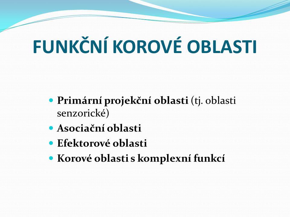 FUNKČNÍ KOROVÉ OBLASTI Primární projekční oblasti (tj.