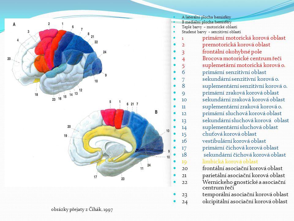 A laterální plocha hemisféry B mediální plocha hemisféry Teplé barvy – motorické oblasti Studené barvy – senzitivní oblasti 1 primární motorická korová oblast 2premotorická korová oblast 3 frontální okohybné pole 4Brocova motorické centrum řeči 5suplemetární motorická korová o.