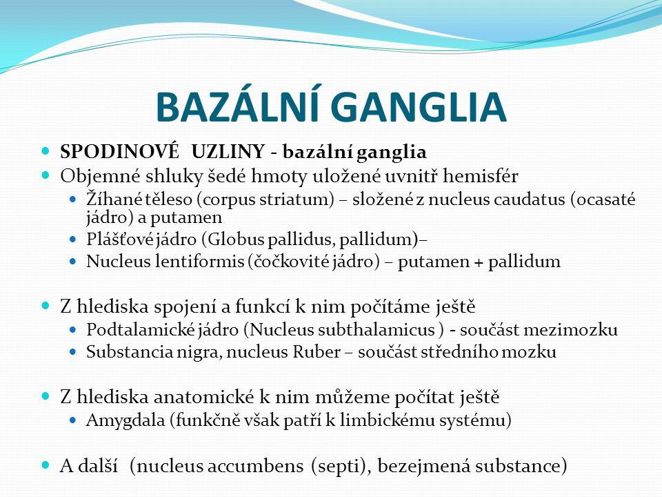 BAZÁLNÍ GANGLIA SPODINOVÉ UZLINY - bazální ganglia Objemné shluky šedé hmoty uložené uvnitř hemisfér Žíhané těleso (corpus striatum) – složené z nucleus caudatus (ocasaté jádro) a putamen Plášťové jádro (Globus pallidus, pallidum)– Nucleus lentiformis (čočkovité jádro) – putamen + pallidum Z hlediska spojení a funkcí k nim počítáme ještě Podtalamické jádro (Nucleus subthalamicus ) - součást mezimozku Substancia nigra, nucleus Ruber – součást středního mozku Z hlediska anatomické k nim můžeme počítat ještě Amygdala (funkčně však patří k limbickému systému) A další (nucleus accumbens (septi), bezejmená substance)