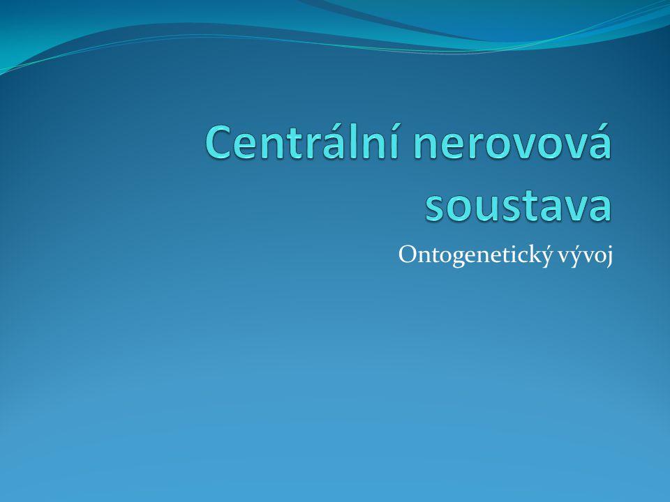 Ontogenetický vývoj