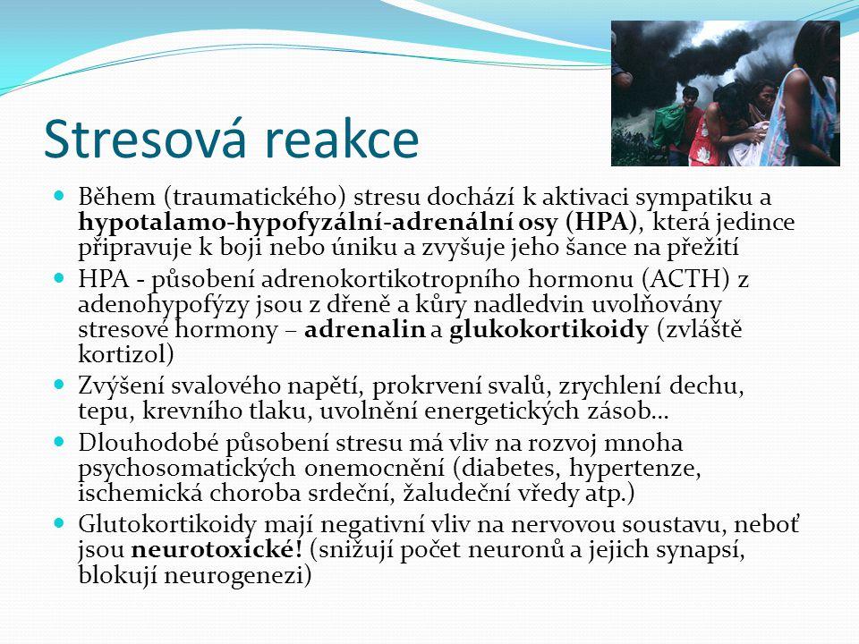 Stresová reakce Během (traumatického) stresu dochází k aktivaci sympatiku a hypotalamo-hypofyzální-adrenální osy (HPA), která jedince připravuje k boji nebo úniku a zvyšuje jeho šance na přežití HPA - působení adrenokortikotropního hormonu (ACTH) z adenohypofýzy jsou z dřeně a kůry nadledvin uvolňovány stresové hormony – adrenalin a glukokortikoidy (zvláště kortizol) Zvýšení svalového napětí, prokrvení svalů, zrychlení dechu, tepu, krevního tlaku, uvolnění energetických zásob… Dlouhodobé působení stresu má vliv na rozvoj mnoha psychosomatických onemocnění (diabetes, hypertenze, ischemická choroba srdeční, žaludeční vředy atp.) Glutokortikoidy mají negativní vliv na nervovou soustavu, neboť jsou neurotoxické.