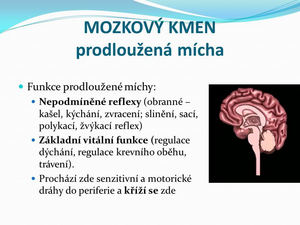 MOZKOVÝ KMEN prodloužená mícha Funkce prodloužené míchy: Nepodmíněné reflexy (obranné – kašel, kýchání, zvracení; slinění, sací, polykací, žvýkací ref
