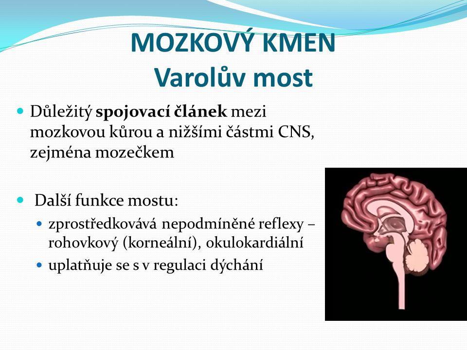MOZKOVÝ KMEN Varolův most Důležitý spojovací článek mezi mozkovou kůrou a nižšími částmi CNS, zejména mozečkem Další funkce mostu: zprostředkovává nep