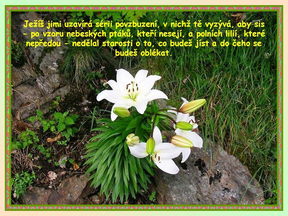 Ježíš jimi uzavírá sérii povzbuzení, v nichž tě vyzývá, aby sis - po vzoru nebeských ptáků, kteří nesejí, a polních lilií, které nepředou - nedělal starosti o to, co budeš jíst a do čeho se budeš oblékat.