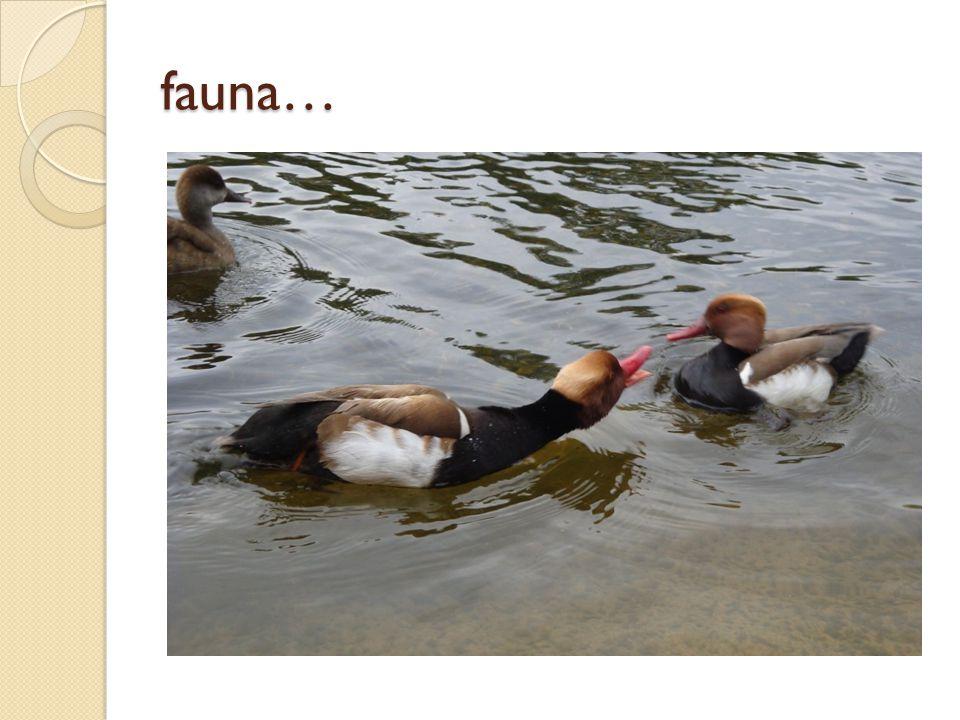 fauna…