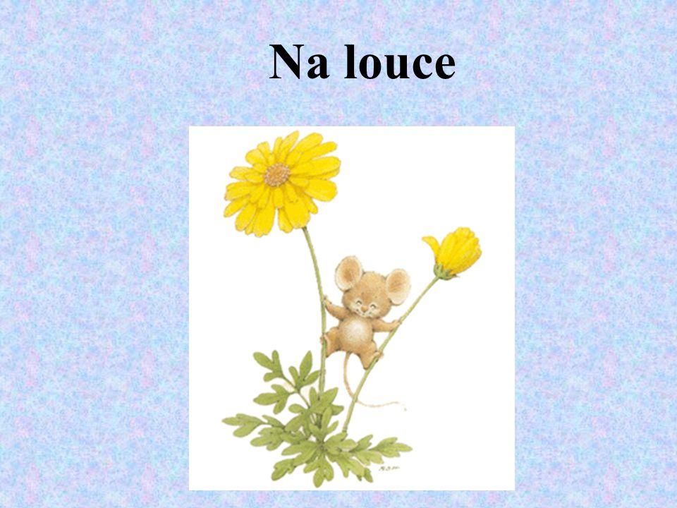 - louka je další přírodní společenství - rostou zde většinou trávy a žijí zde také různí živočichové