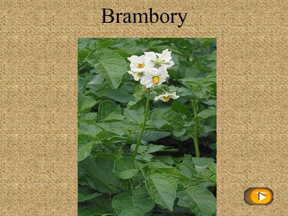 Odkazy www stránek: Úvod – http://www.gify.nou.cz/kvety2.htmhttp://www.gify.nou.cz/kvety2.htm Rostliny- http://www.gify.nou.cz/kvety2.htmhttp://www.gify.nou.cz/kvety2.htm Brambory- http://cs.wikipedia.org/wiki/Bramboryhttp://cs.wikipedia.org/wiki/Brambory Kukuřice- http://obrazky.cz/?step=20&filter=1&s=&size=any&sId=09_BTDGxwMEhBf8eLwVX&orientation=&q=kuku%C5%99icehttp://obrazky.cz/?step=20&filter=1&s=&size=any&sId=09_BTDGxwMEhBf8eLwVX&orientation=&q=kuku%C5%99ice Řepka olejka – http://obrazky.cz/?step=20&filter=1&s=&size=any&sId=09_BTDGxCdFIBfQiBAW7&orientation=&q=%C5%99epka+olejka+ http://obrazky.cz/?step=20&filter=1&s=&size=any&sId=09_BTDGxCdFIBfQiBAW7&orientation=&q=%C5%99epka+olejka Slunečnice- http://cs.wikipedia.org/wiki/Slune%C4%8Dnicehttp://cs.wikipedia.org/wiki/Slune%C4%8Dnice Řepa cukrovka- http://obrazky.cz/?step=20&filter=1&s=&size=any&sId=09_BTDGxC_51BfQb88iv&orientation=&q=%C5%99epa+cukrovka http://obrazky.cz/?step=20&filter=1&s=&size=any&sId=09_BTDGxC_51BfQb88iv&orientation=&q=%C5%99epa+cukrovka Pšenice- http://cs.wikipedia.org/wiki/P%C5%A1enicehttp://cs.wikipedia.org/wiki/P%C5%A1enice Oves- http://www.aros.cz/photos/osiva-a-krmiva/oves_sety_1.jpghttp://www.aros.cz/photos/osiva-a-krmiva/oves_sety_1.jpg Žito- http://obrazky.cz/?step=20&filter=1&s=&size=any&sId=09_BTDGxCoYFBf8A-w8p&orientation=&q=%C5%BEitohttp://obrazky.cz/?step=20&filter=1&s=&size=any&sId=09_BTDGxCoYFBf8A-w8p&orientation=&q=%C5%BEito Ječmen- http://obrazky.cz/?step=20&filter=1&s=&size=any&sId=09_BTDGxOVs5Bf8tMos7&orientation=&q=je%C4%8Dmenhttp://obrazky.cz/?step=20&filter=1&s=&size=any&sId=09_BTDGxOVs5Bf8tMos7&orientation=&q=je%C4%8Dmen Kmín kořenný- http://obrazky.cz/?step=20&filter=1&s=&size=any&sId=09_BTDGxOuZdlPD39eRU&orientation=&q=km%C3%ADnhttp://obrazky.cz/?step=20&filter=1&s=&size=any&sId=09_BTDGxOuZdlPD39eRU&orientation=&q=km%C3%ADn Len setý- http://obrazky.cz/?step=20&filter=1&s=&size=any&sId=09_BTDGxOBwzlP4_KuPU&orientation=&q=lenhttp://obrazky.cz/?step=20&filter=1&s=&size=