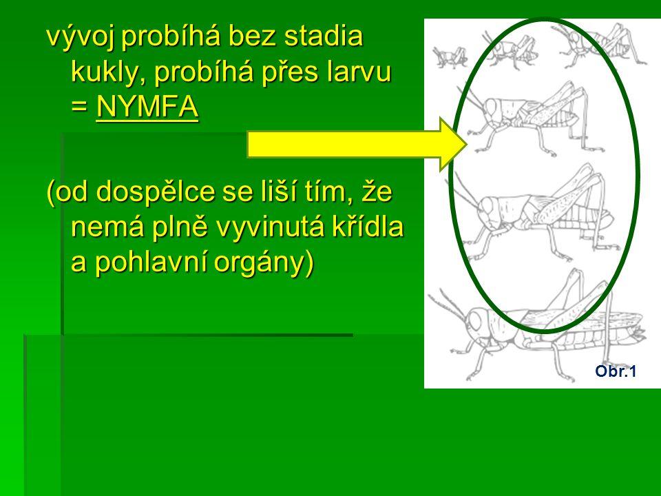vývoj probíhá bez stadia kukly, probíhá přes larvu = NYMFA (od dospělce se liší tím, že nemá plně vyvinutá křídla a pohlavní orgány) Obr.1