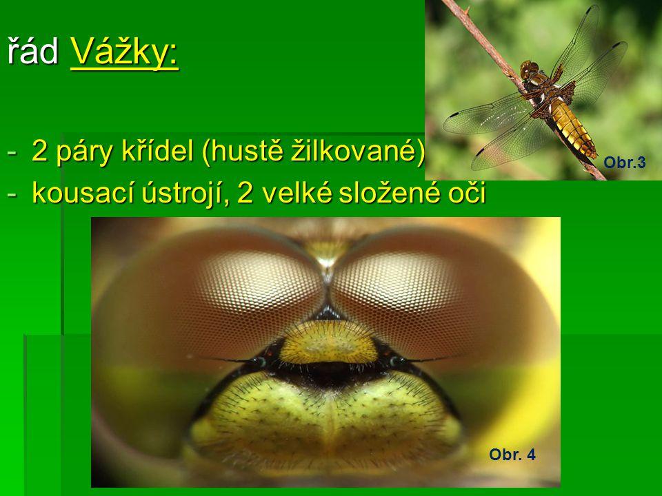 řád Vážky: -2-2-2-2 páry křídel (hustě žilkované) -k-k-k-kousací ústrojí, 2 velké složené oči Obr. 4 Obr.3