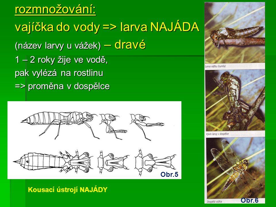 rozmnožování: vajíčka do vody => larva NAJÁDA (název larvy u vážek) – dravé 1 – 2 roky žije ve vodě, pak vylézá na rostlinu => proměna v dospělce Obr.