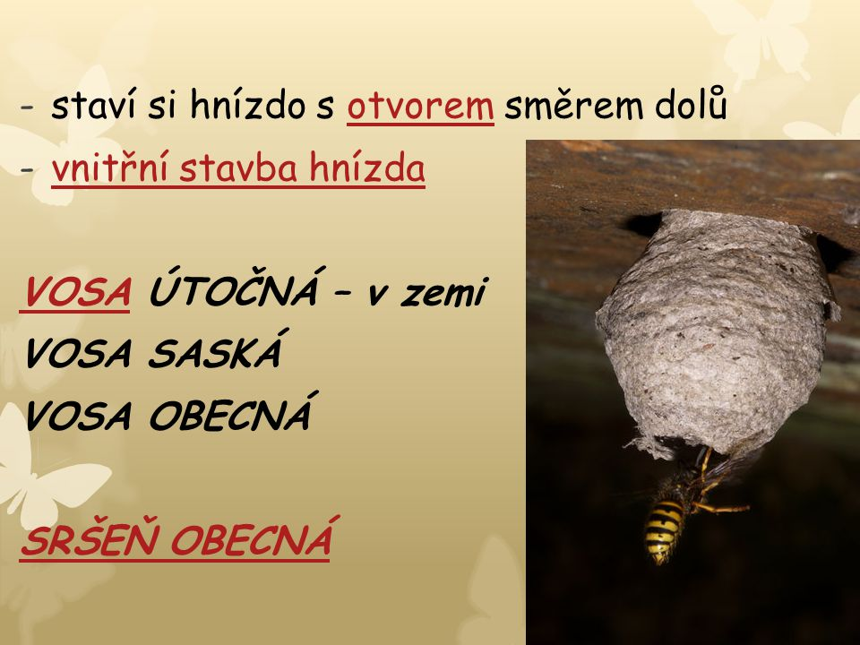 -staví si hnízdo s otvorem směrem dolůotvorem -vnitřní stavba hnízdavnitřní stavba hnízda VOSAVOSA ÚTOČNÁ – v zemi VOSA SASKÁ VOSA OBECNÁ SRŠEŇ OBECNÁ