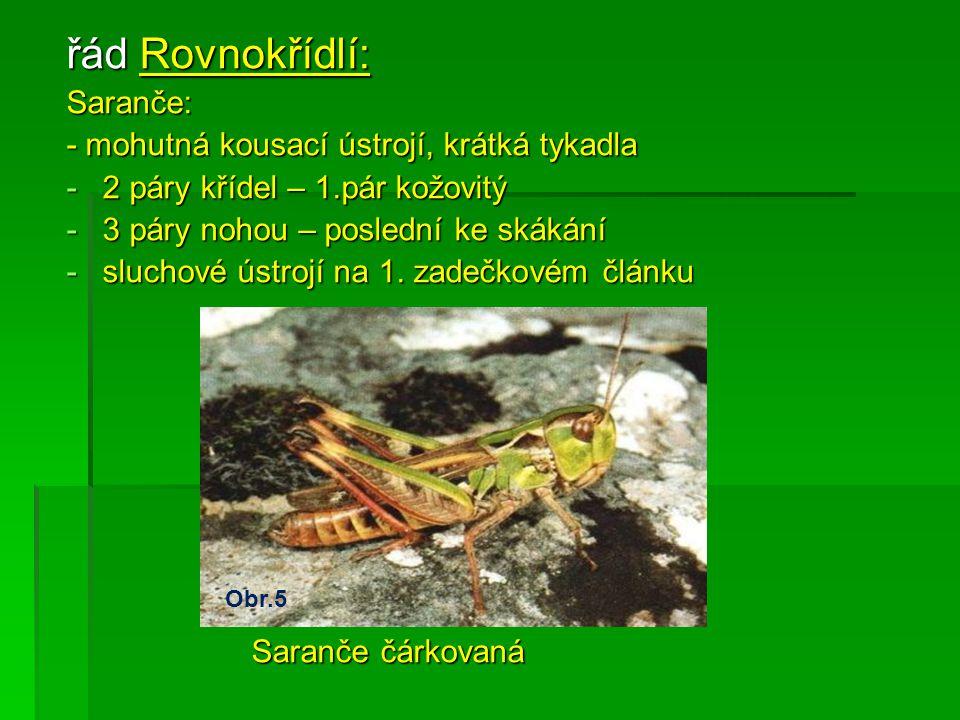 řád Rovnokřídlí: Saranče: - mohutná kousací ústrojí, krátká tykadla -2-2-2-2 páry křídel – 1.pár kožovitý -3-3-3-3 páry nohou – poslední ke skákání -s