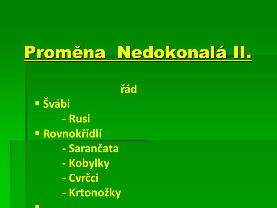 Proměna Nedokonalá II. řád  Švábi - Rusi  Rovnokřídlí - Sarančata - Kobylky - Cvrčci - Krtonožky 