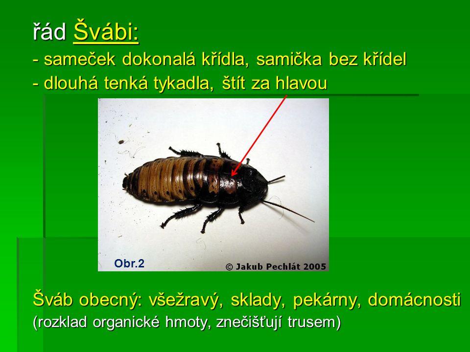Zdroje obrázků:  Obr.1 http://cs.wikipedia.org/wiki/Nymfa_(biologie)  Obr.2 PECHLÁT, Jakub.