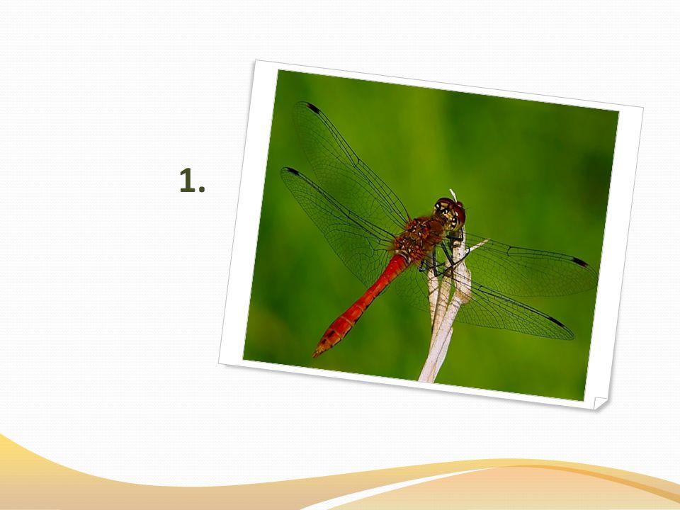 Zdroje: http://www.biolib.cz/cz/taxonimage/id35429/ http://www.agromanual.cz/cz/atlas/skudci/skudce/cervci-stitenkoviti-puklicoviti-cervcoviti.html http://www.macro-world.cz/image.php?id_foto=669&gal=18 http://www.neviditelnycert.cz/blog/pel-mel/1245-cikada-hmyz-ktery-pocita.html http://www.macro-world.cz/image.php?id_foto=255&best http://www.biolib.cz/cz/taxonimage/id11674/?taxonid=133520 http://www.biolib.cz/cz/image/id6417/ http://www.biolib.cz/cz/image/id17539/ http://www.biolib.cz/cz/image/id60583/ http://www.biolib.cz/cz/image/id28818/ http://www.biolib.cz/cz/image/id57526/ http://www.biolib.cz/cz/image/id268/ http://www.biolib.cz/cz/image/id1072/ http://www.skudci.com/krtonozka-obecna http://www.biolib.cz/cz/image/id77490/ http://www.naturess.net/fotka-hmyz-penodejka_cervena_(cercopis_vulnerata)-8431 http://www.biolib.cz/cz/image/id159581/ http://www.biolib.cz/cz/taxonimage/id119915/ http://www.zoologie.frasma.cz/mmp%200214%20sestinozi/%C5%A1estinoz%C3%AD.html http://fotobanka.nabla.cz/obsah/fotky-poteseni/rumenice-pospolna.php