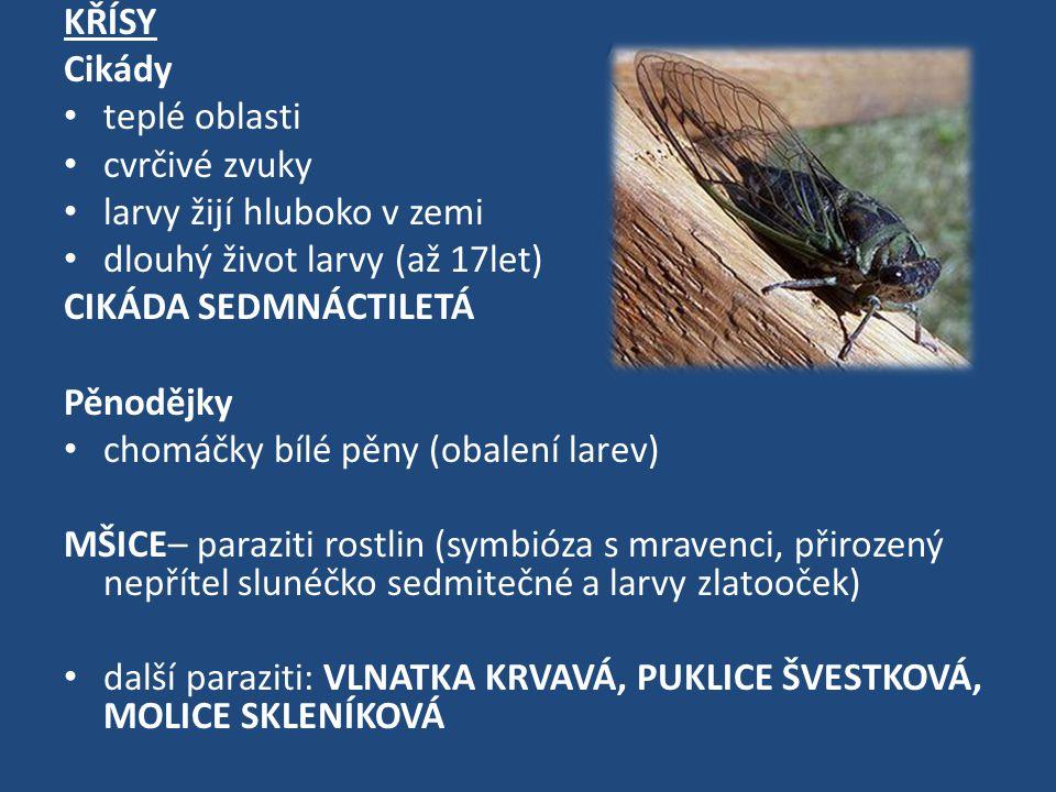 KŘÍSY Cikády teplé oblasti cvrčivé zvuky larvy žijí hluboko v zemi dlouhý život larvy (až 17let) CIKÁDA SEDMNÁCTILETÁ Pěnodějky chomáčky bílé pěny (obalení larev) MŠICE– paraziti rostlin (symbióza s mravenci, přirozený nepřítel slunéčko sedmitečné a larvy zlatooček) další paraziti: VLNATKA KRVAVÁ, PUKLICE ŠVESTKOVÁ, MOLICE SKLENÍKOVÁ