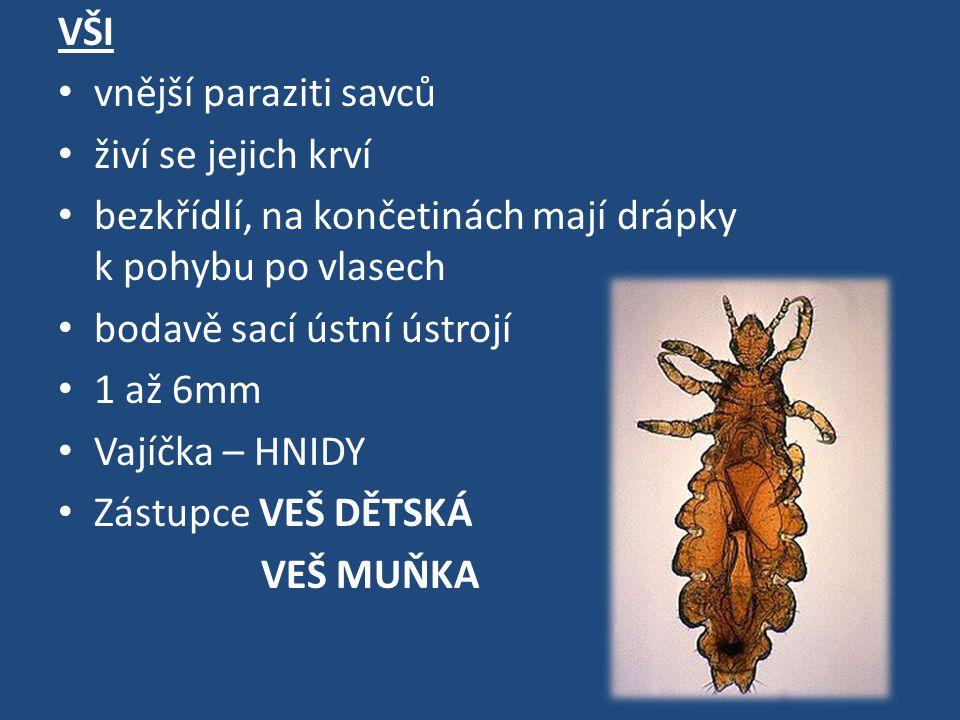 VŠI vnější paraziti savců živí se jejich krví bezkřídlí, na končetinách mají drápky k pohybu po vlasech bodavě sací ústní ústrojí 1 až 6mm Vajíčka – HNIDY Zástupce VEŠ DĚTSKÁ VEŠ MUŇKA