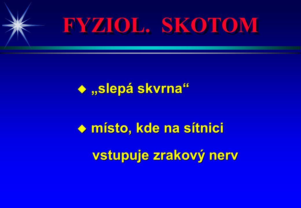 """FYZIOL. SKOTOM u """"slepá skvrna"""" u místo, kde na sítnici vstupuje zrakový nerv vstupuje zrakový nerv"""