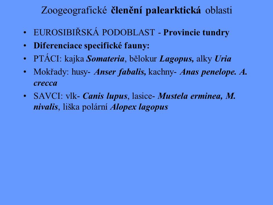 Zoogeografické členění palearktická oblasti EUROSIBIŘSKÁ PODOBLAST - Provincie tundry Diferenciace specifické fauny: PTÁCI: kajka Somateria, bělokur L