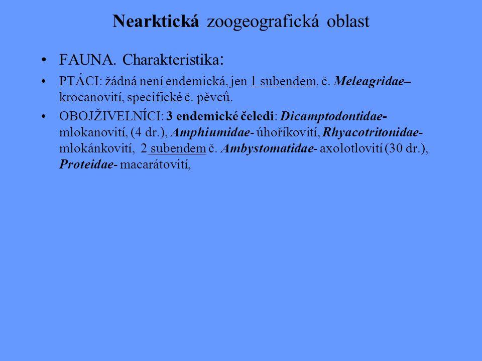 Nearktická zoogeografická oblast FAUNA. Charakteristika : PTÁCI: žádná není endemická, jen 1 subendem. č. Meleagridae– krocanovití, specifické č. pěvc