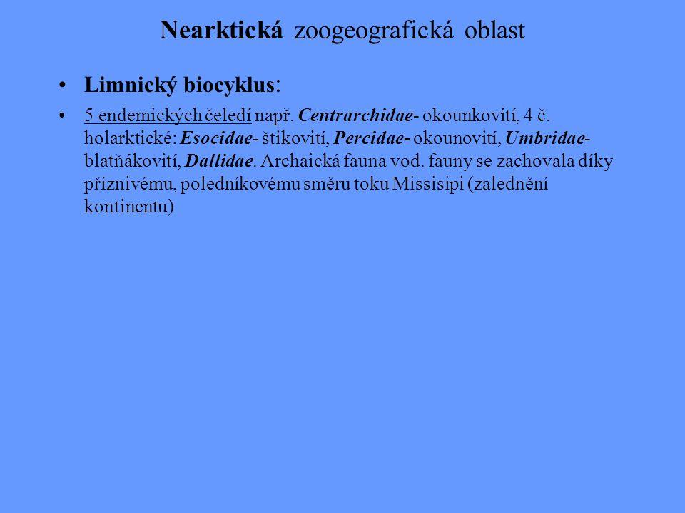 Nearktická zoogeografická oblast Limnický biocyklus : 5 endemických čeledí např. Centrarchidae- okounkovití, 4 č. holarktické: Esocidae- štikovití, Pe