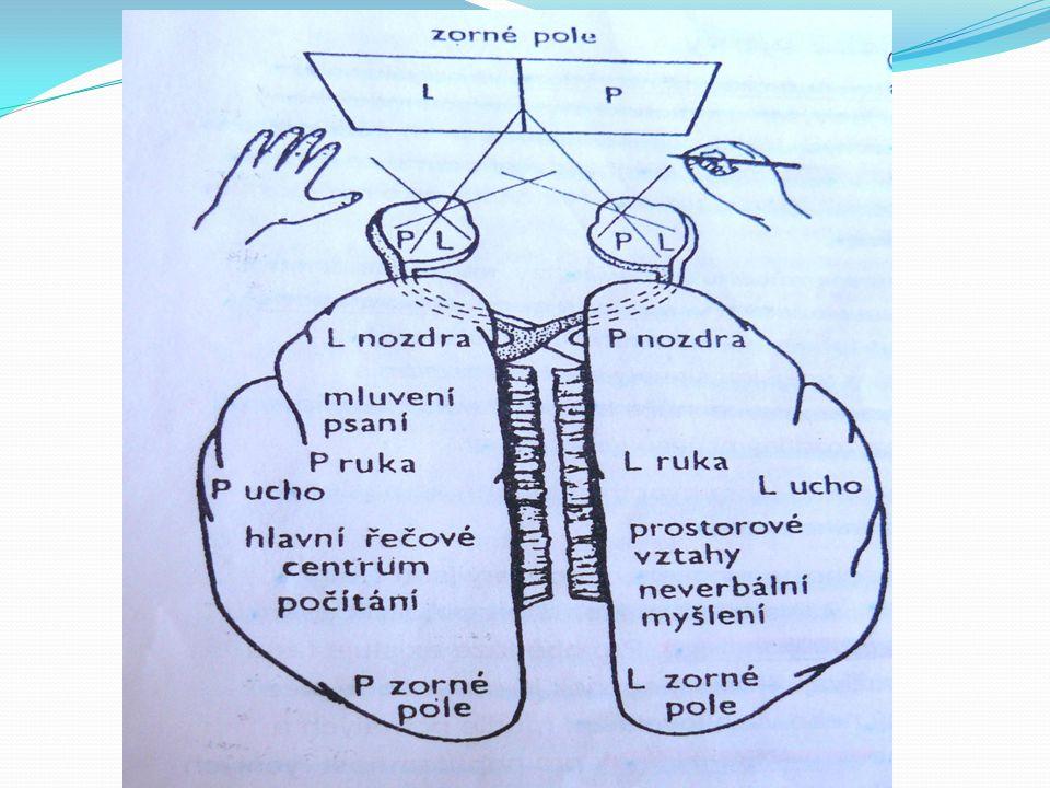 Fyziologie řeči Brocovo motorické centrum řeči Area 44,45 V dominantní hemisféře- např.