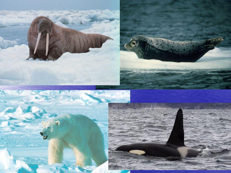 Baffinův ostrov