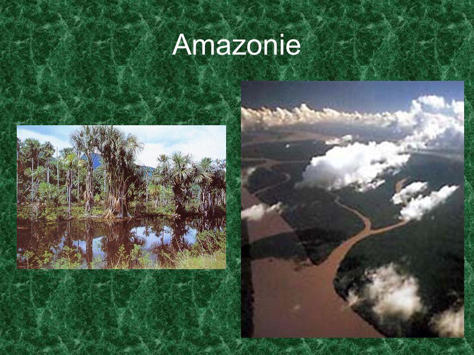 Jádrové oblasti Místního, regionálního či globálního významu Globální – na sebe váží mimořádný populační, hospodářský, obslužný, výzkumný, politický a správní potenciál současného světa Základem je většinou velká aglomerace s nevratným stupněm přeměny původního přírodního prostředí (uměle udržovaná zeleň)