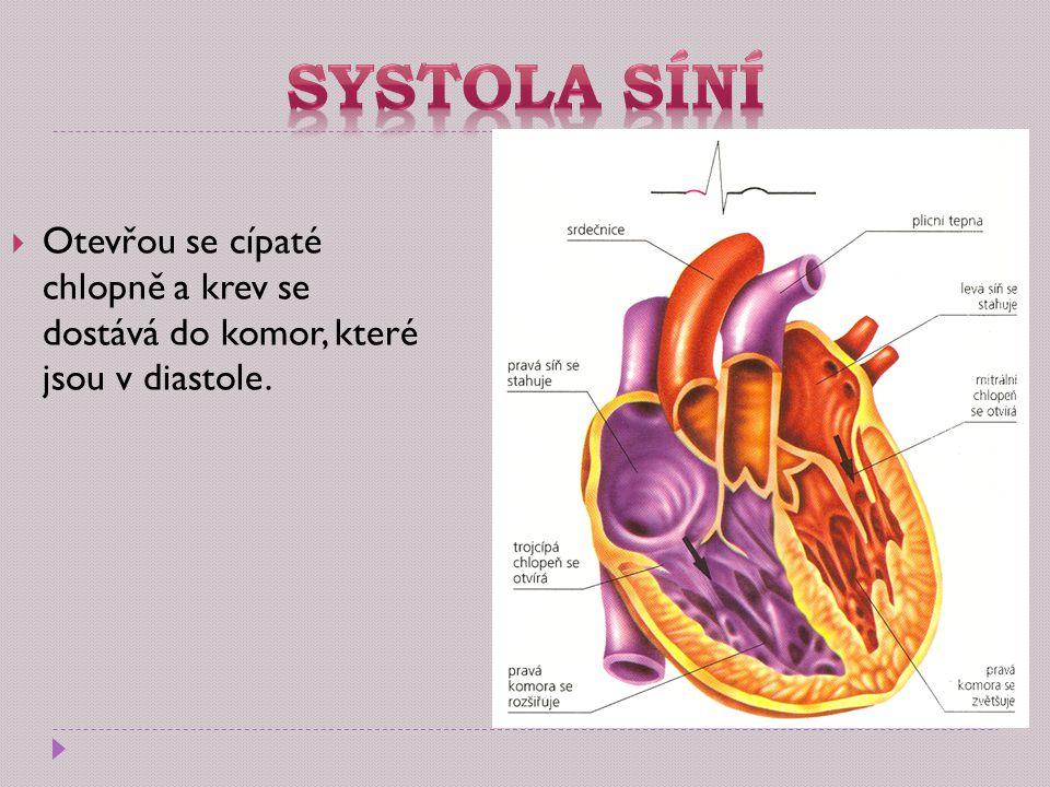  Otevřou se cípaté chlopně a krev se dostává do komor, které jsou v diastole.