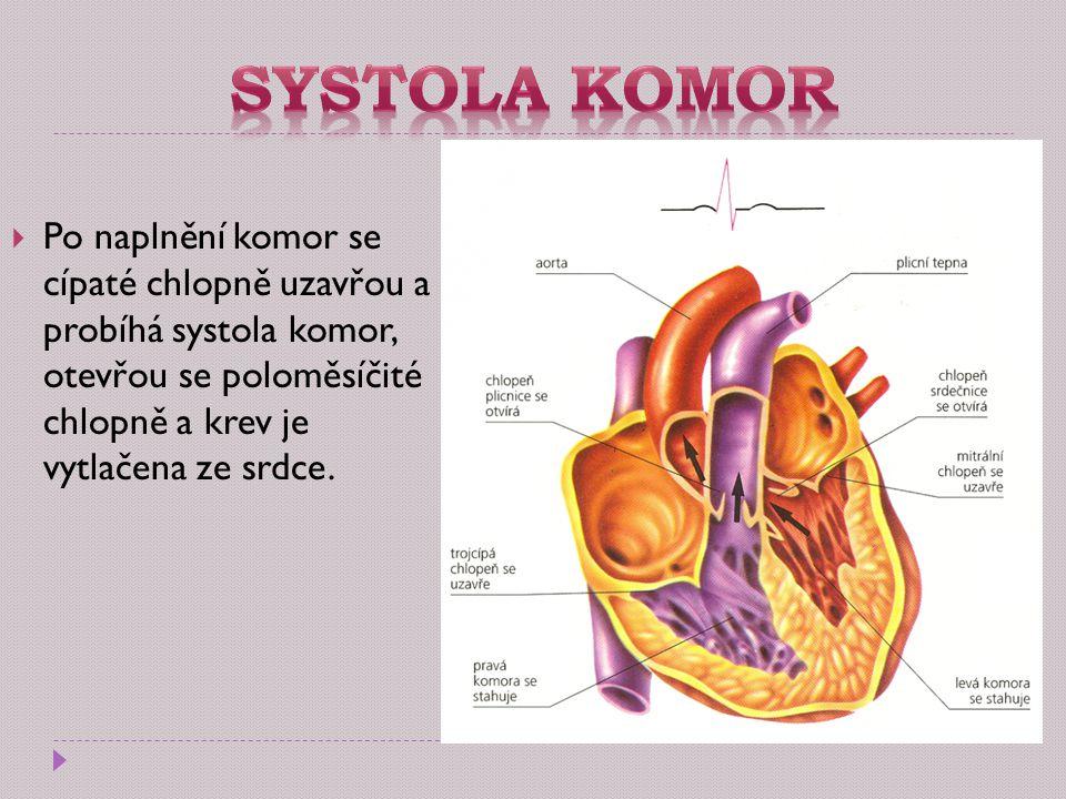 Po naplnění komor se cípaté chlopně uzavřou a probíhá systola komor, otevřou se poloměsíčité chlopně a krev je vytlačena ze srdce.