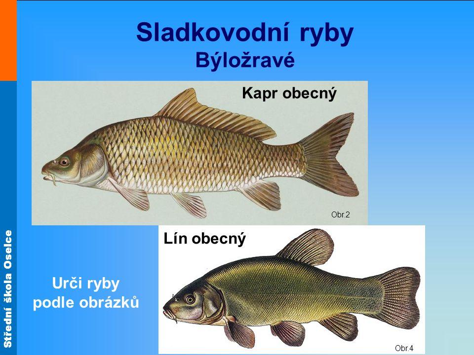Střední škola Oselce Obr.4 Obr.2 Sladkovodní ryby Býložravé Kapr obecný Lín obecný Urči ryby podle obrázků