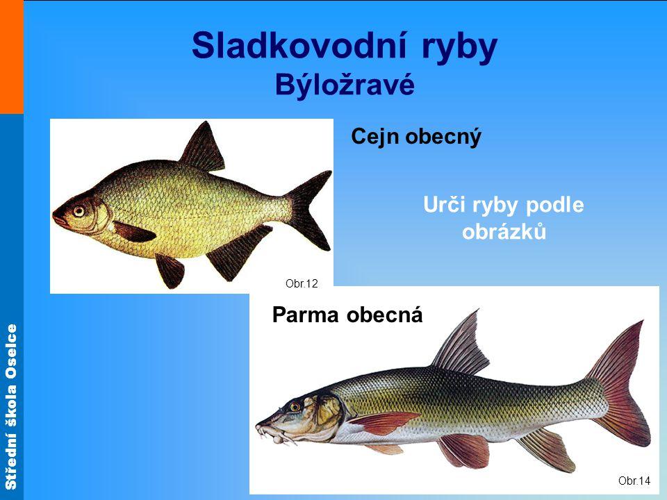 Střední škola Oselce Obr.14 Sladkovodní ryby Býložravé Cejn obecný Parma obecná Obr.12 Urči ryby podle obrázků