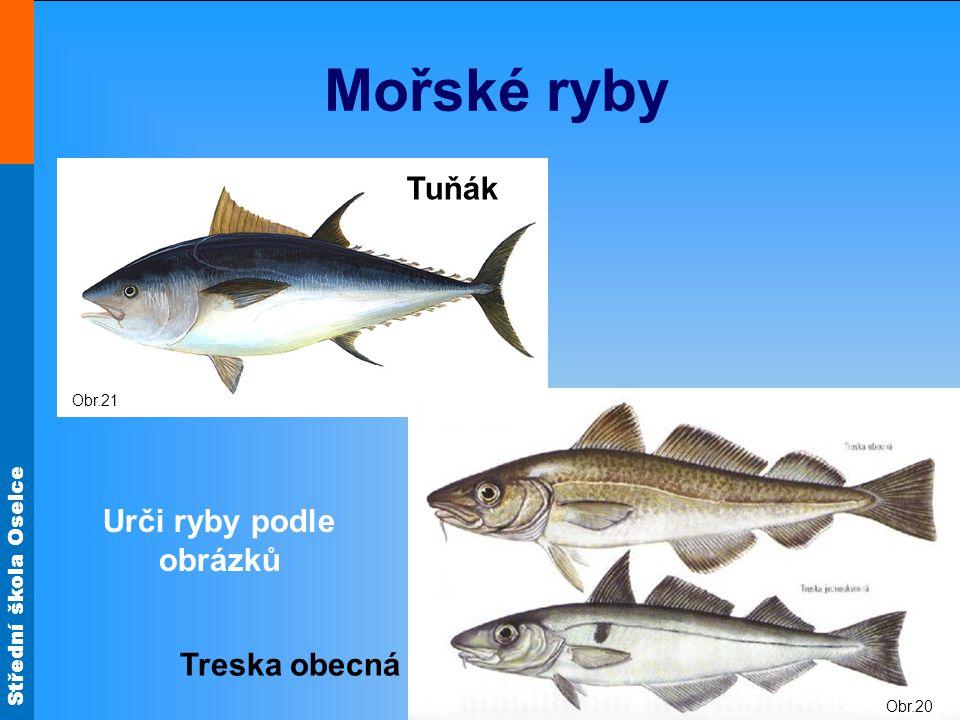 Střední škola Oselce Obr.21 Mořské ryby Tuňák Obr.20 Treska obecná Urči ryby podle obrázků