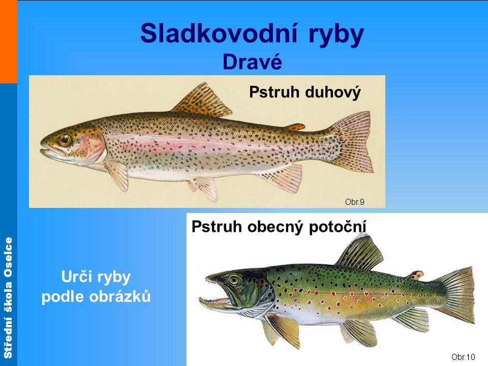 Střední škola Oselce Obr.10 Sladkovodní ryby Dravé Obr.9 Pstruh duhový Pstruh obecný potoční Urči ryby podle obrázků
