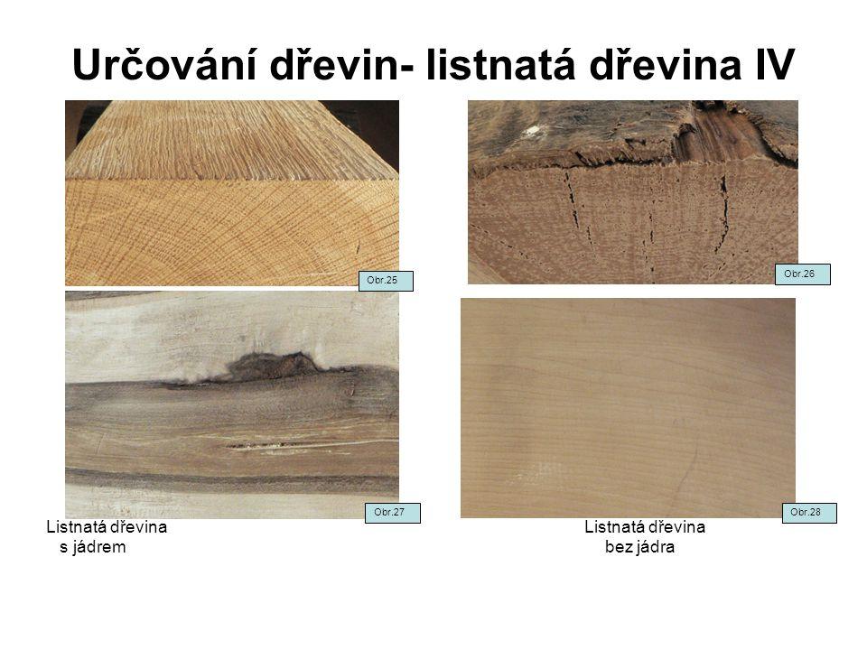 Určování dřevin- listnatá dřevina IV Listnatá dřevina s jádrem bez jádra Obr.27 Obr.25 Obr.26 Obr.28