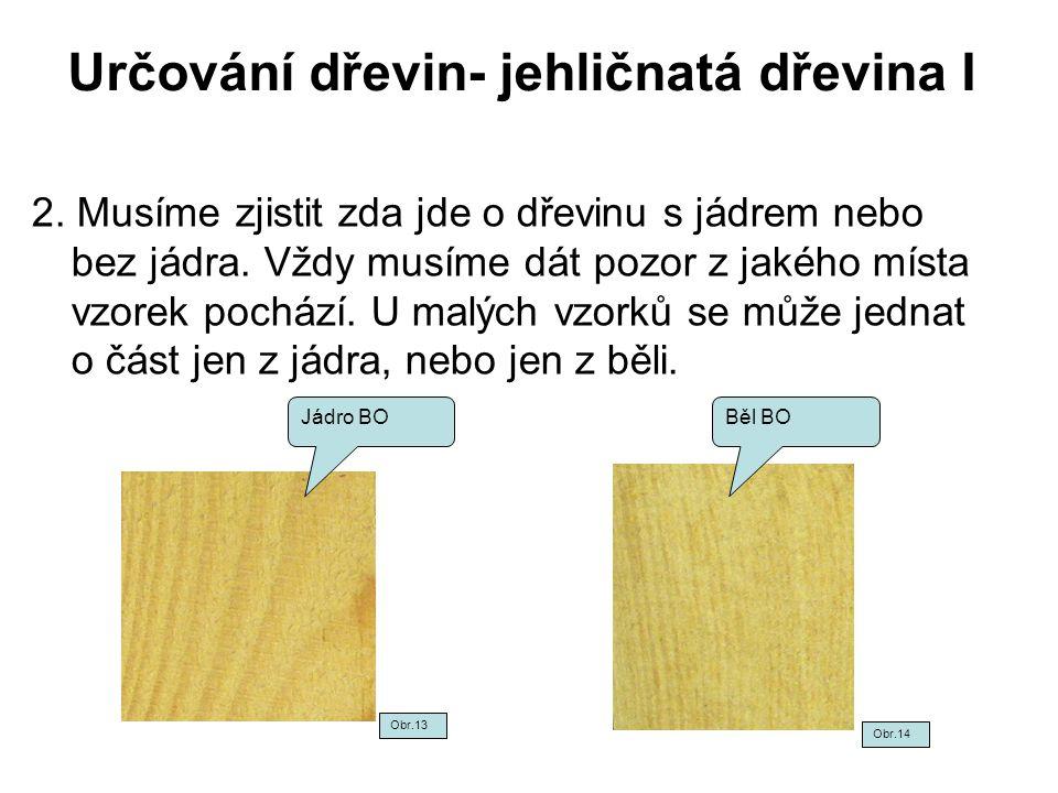 Určování dřevin- jehličnatá dřevina I 2. Musíme zjistit zda jde o dřevinu s jádrem nebo bez jádra. Vždy musíme dát pozor z jakého místa vzorek pochází