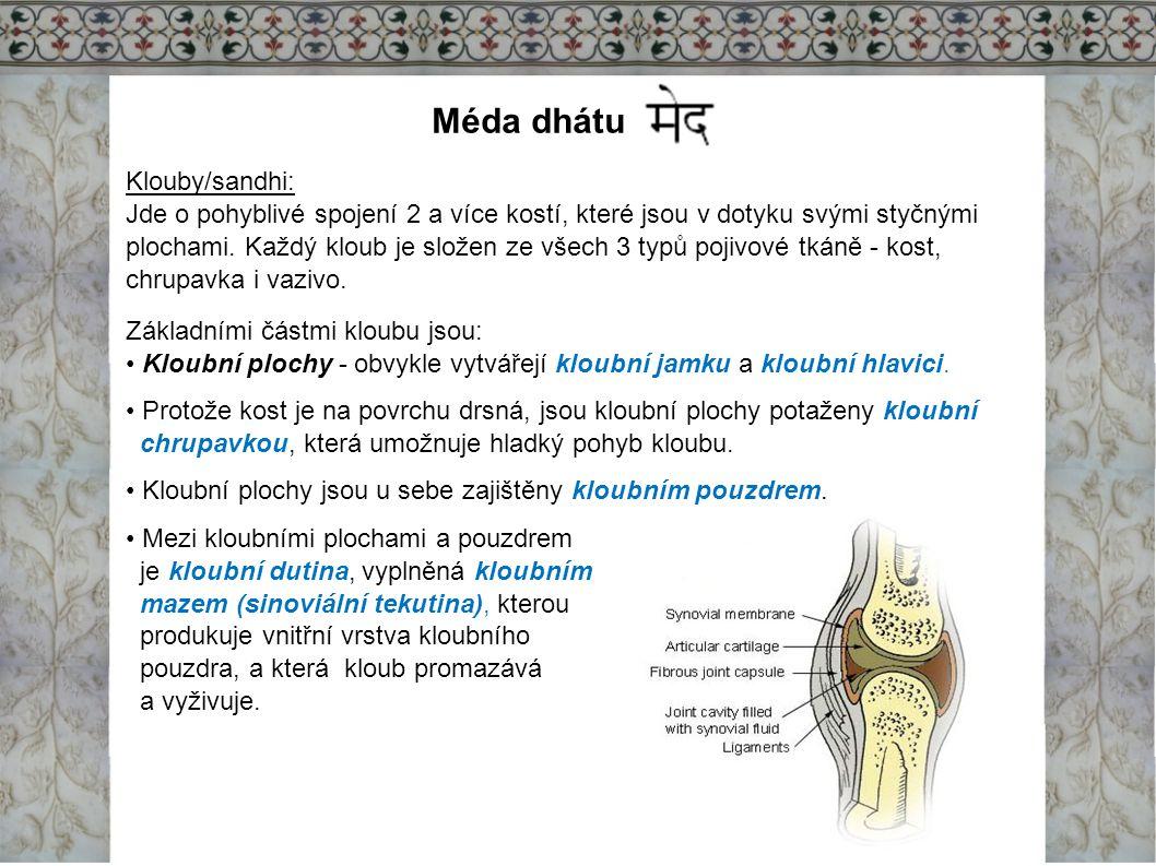 Méda dhátu Klouby/sandhi: Jde o pohyblivé spojení 2 a více kostí, které jsou v dotyku svými styčnými plochami. Každý kloub je složen ze všech 3 typů p