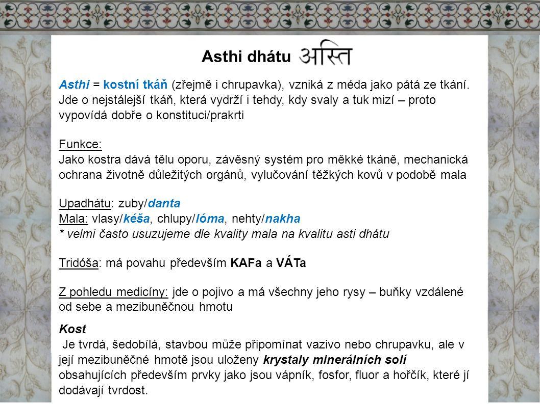 Asthi dhátu Asthi = kostní tkáň (zřejmě i chrupavka), vzniká z méda jako pátá ze tkání. Jde o nejstálejší tkáň, která vydrží i tehdy, kdy svaly a tuk