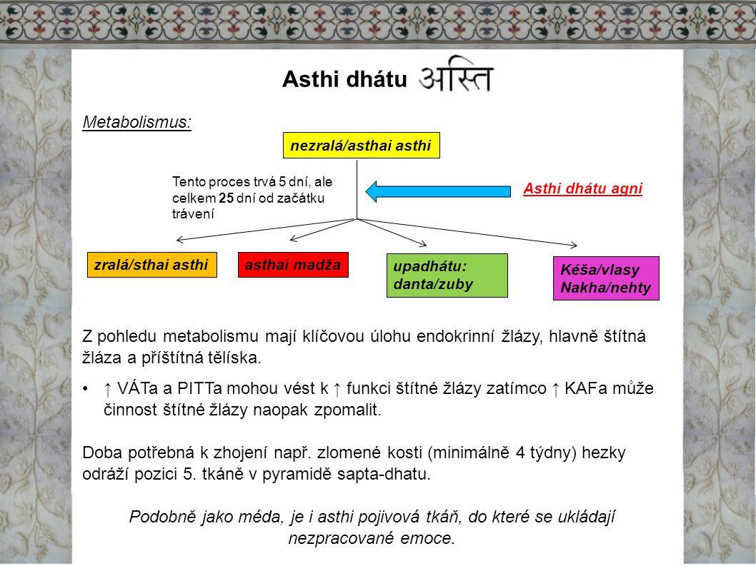 Asthi dhátu Metabolismus: Z pohledu metabolismu mají klíčovou úlohu endokrinní žlázy, hlavně štítná žláza a příštítná tělíska. ↑ VÁTa a PITTa mohou vé