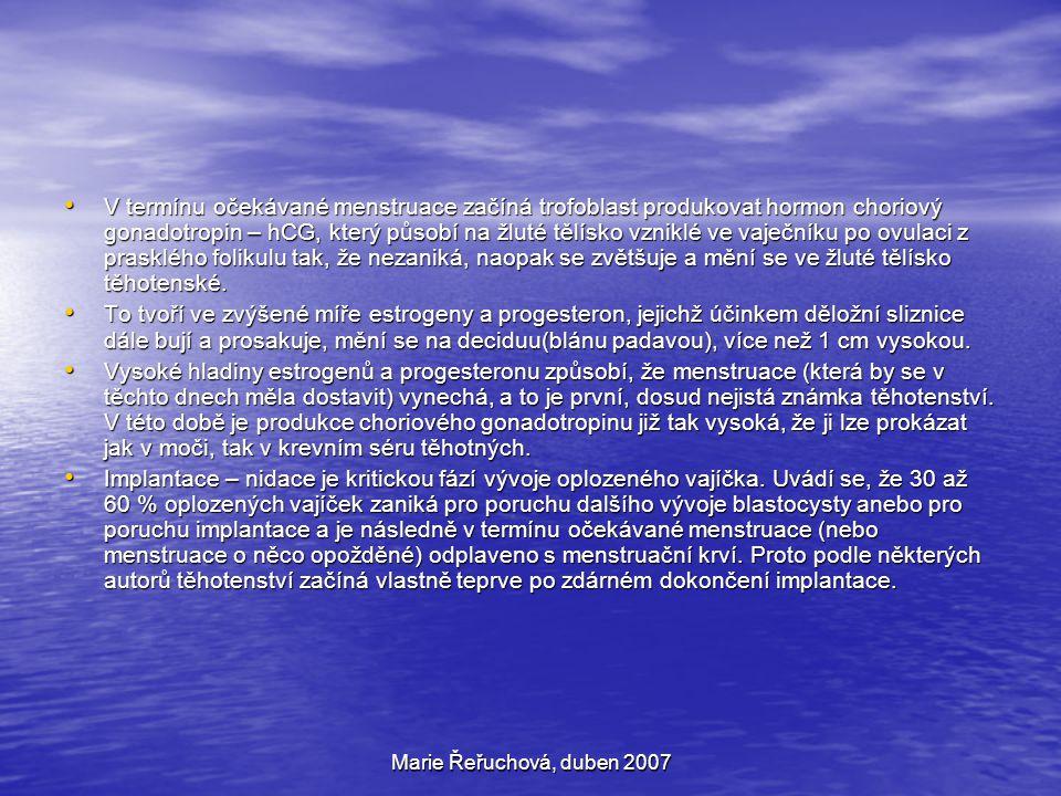 Marie Řeřuchová, duben 2007 V termínu očekávané menstruace začíná trofoblast produkovat hormon choriový gonadotropin – hCG, který působí na žluté tělí