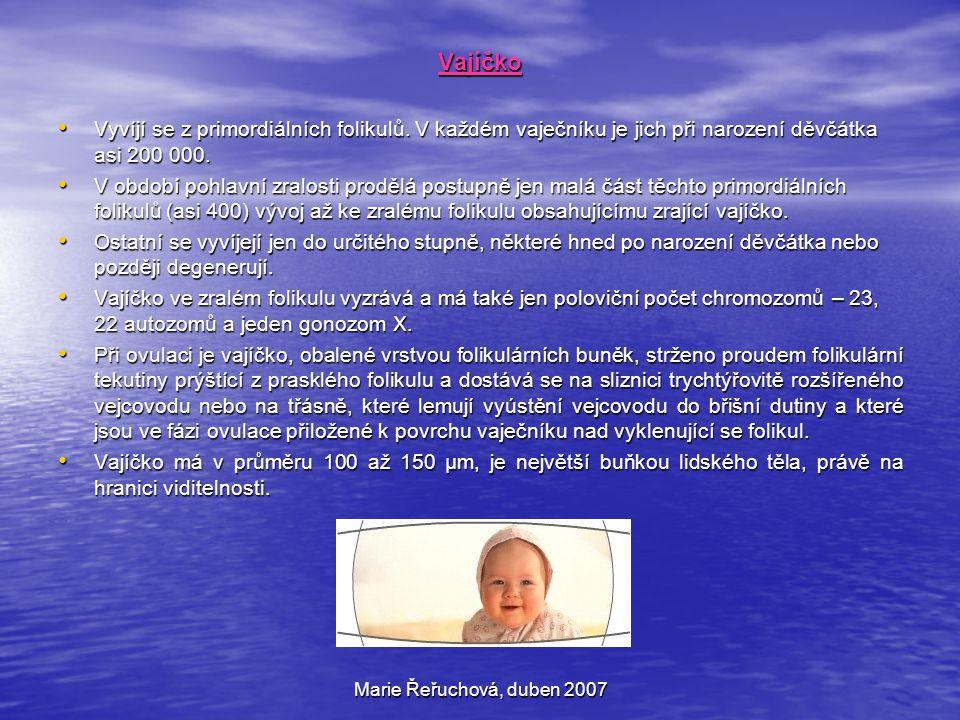Marie Řeřuchová, duben 2007 Vajíčko Vyvíjí se z primordiálních folikulů. V každém vaječníku je jich při narození děvčátka asi 200 000. Vyvíjí se z pri