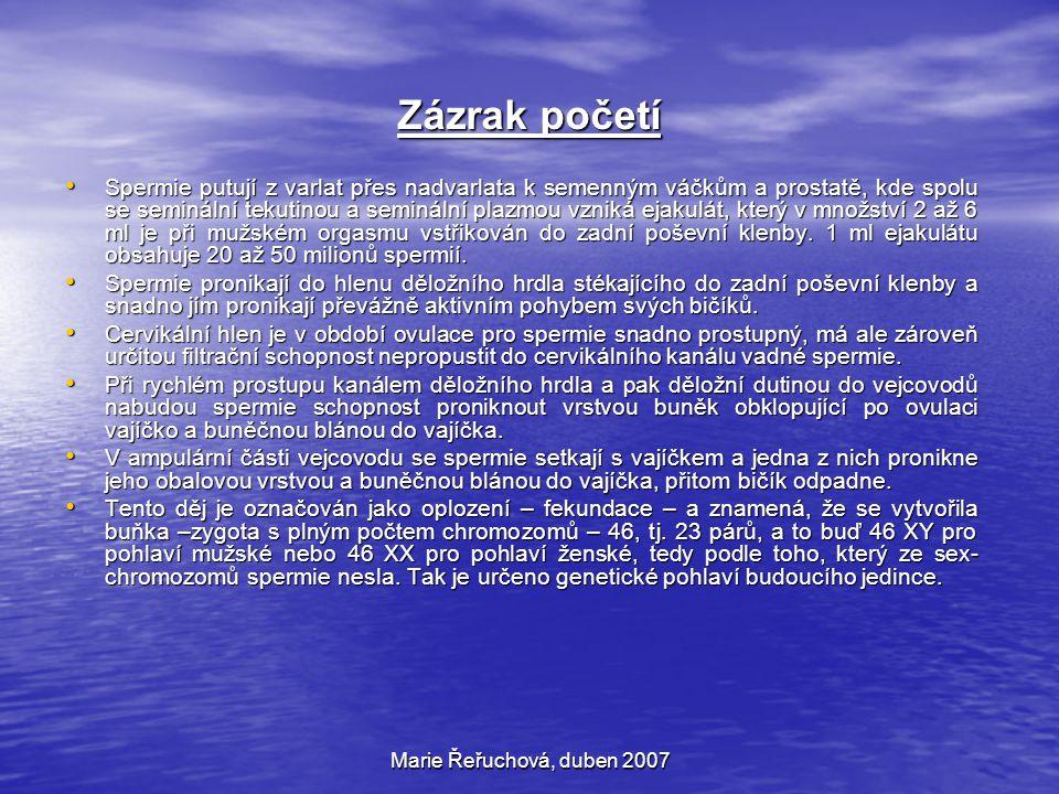 Marie Řeřuchová, duben 2007 Zázrak početí Spermie putují z varlat přes nadvarlata k semenným váčkům a prostatě, kde spolu se seminální tekutinou a sem