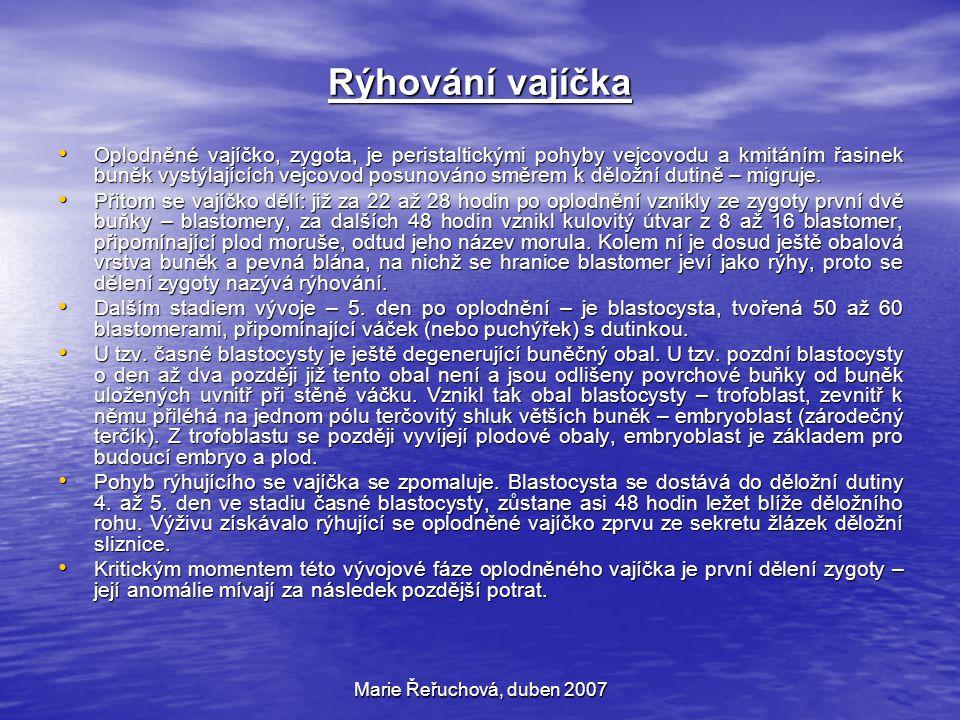 Marie Řeřuchová, duben 2007 Uhnízdění, nidace, implantace oplodněného vajíčka Za 6 až 7 dnů po oplození vajíčka (tj.