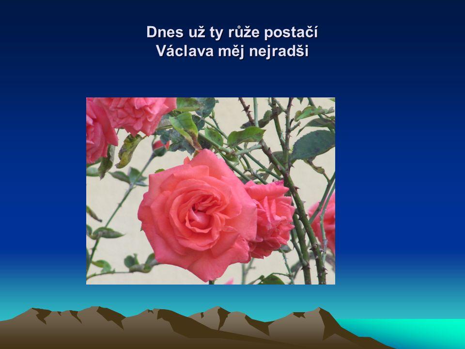 Dnes už ty růže postačí Václava měj nejradši