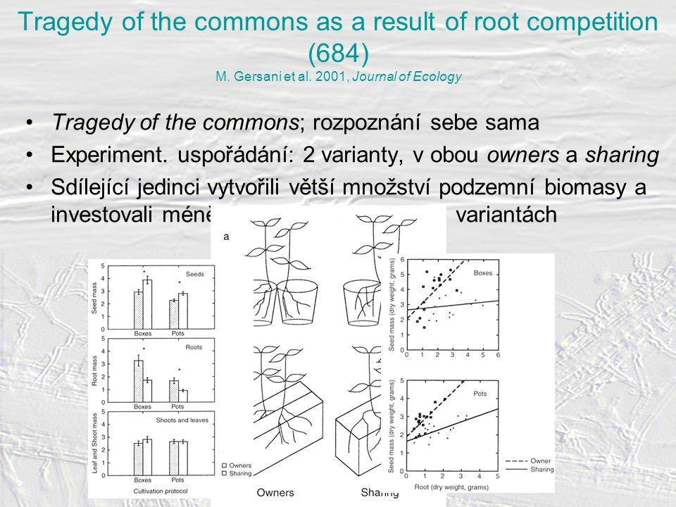 Tragedy of the commons as a result of root competition (684) M.