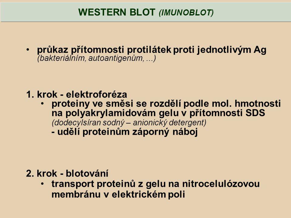průkaz přítomnosti protilátek proti jednotlivým Ag (bakteriálním, autoantigenům,...) 1.krok - elektroforéza proteiny ve směsi se rozdělí podle mol. hm